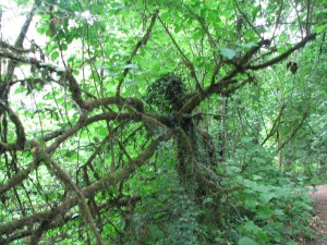 16 Tree Sprite