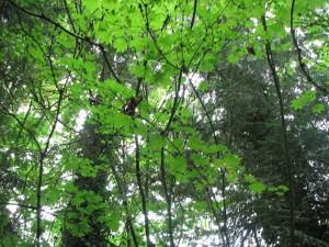 8 BranchWeb Against Broad Leaves