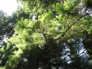 9 Evergreens Against Sky