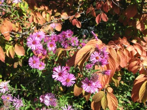 PurplePink Flowers  Orange Leaves 2