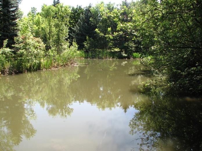 2 Pond Mirroring Trees