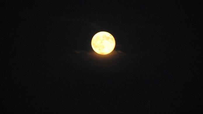 7 Yellow Moon (5)