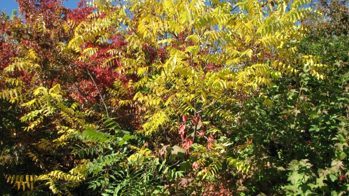 1 MultiColored Leaves